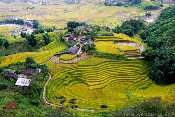 Ruộng bậc thang Sa Pa sẽ càng đẹp và quyến rũ hơn vào mùa lúa chín (khoảng tháng 9)